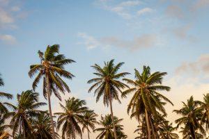 Palmen am Strand mit blauem Himmel Missionswerk Kalrsruhe Ermutigung der Woche ein Geschenk für dich
