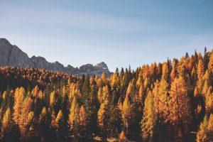 Missionswerk Karlsruhe Ermutigung der Woche Gott hat einen einzigartigen Plan mit dir Herbstwald von oben