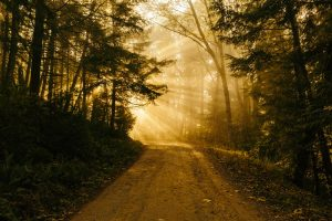 Missionswerk Karlsruhe Ermutigung der Woche Dein Begleiter Sonnenstrahlen im Wald