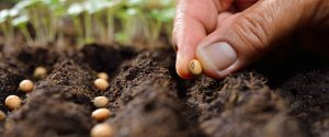 Hand legt Samenkorn in Saatreihen im Hintergrund grüne Keimlinge Missionswerk Karlsruhe Saat und Ernte