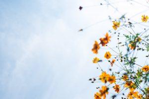 Missionswerk Karlsruhe Ermutigung der Woche Strahlender Friede Bunte Blumen vor blauem Himmel