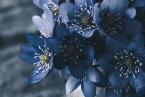 Missionswerk Karlsruhe Ermutigung der Woche Gottes Fülle für dich Blaue Blüten