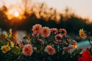 Missionswerk Karlsruhe Ermutigung der Woche Das erste Wunder Jesu Blumen vor Sonnenaufgang