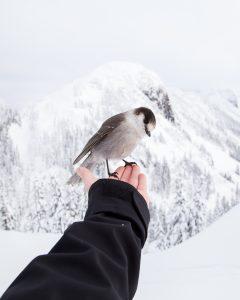 Kleiner Vogel auf der Hand in Winterlandschaft Ermutigung der Woche Entweder oder Missionswerk Karlsruhe