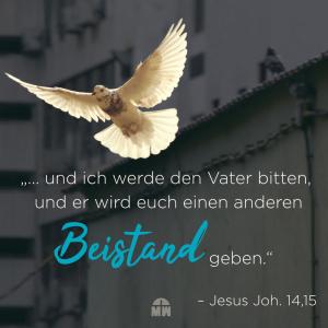 Weiße Taube Dein Begleiter Ermutigung der Woche Missionswerk Karlsruhe