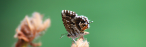 Ein Schmetterling auf einer Blüte Vertraue Jesus in jeder Lage Ermutigung der Woche Missionswerk Karlsruhe