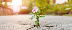 Blume bricht durch den Asphalt Ein Wunder für dich Missionswerk Karlsruhe