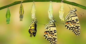 Entfalten wie ein Schmetterling Missionswerk Karlsruhe