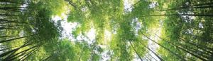 Sonnenlicht im Wald Das Niveau unserer Erwartungen Ermutigung der Woche Missionswerk Karlsruhe