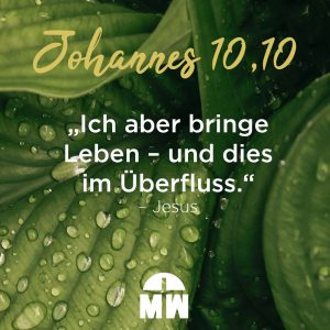 Wassertropfen auf grünem Blatt Das erste Wunder von Jesus Ermutigung der Woche Missionswerk Karlsruhe